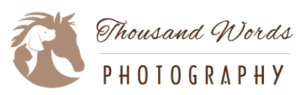 Thousand Words Photography, Equine and Horse Portraits in Williston and Ocala, Florida